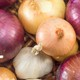 Salmonella outbreak linked to onions expands to 43 states